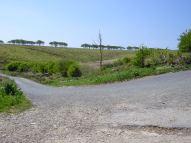This hill felt steeper than it looks!