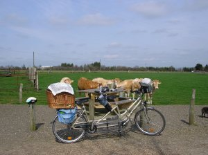 Another early outing for our DoubleDream tandem - complete with Bosun in a basket!