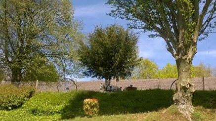 Sourdeval-Brouins 2016-05-04 005